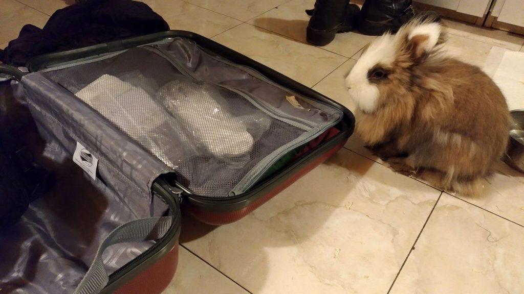 Ciccio e la valigia