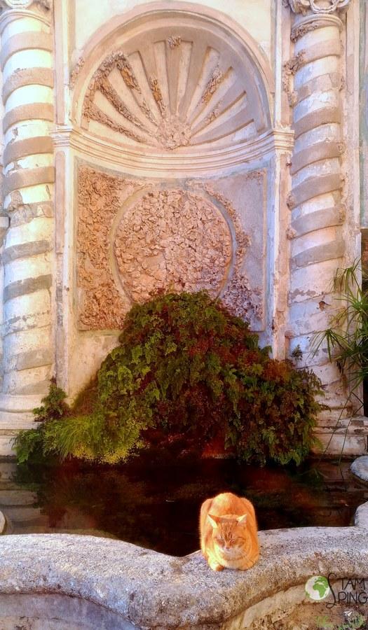 gatto a riposo - Giardino della minerva, salerno, orto botanico