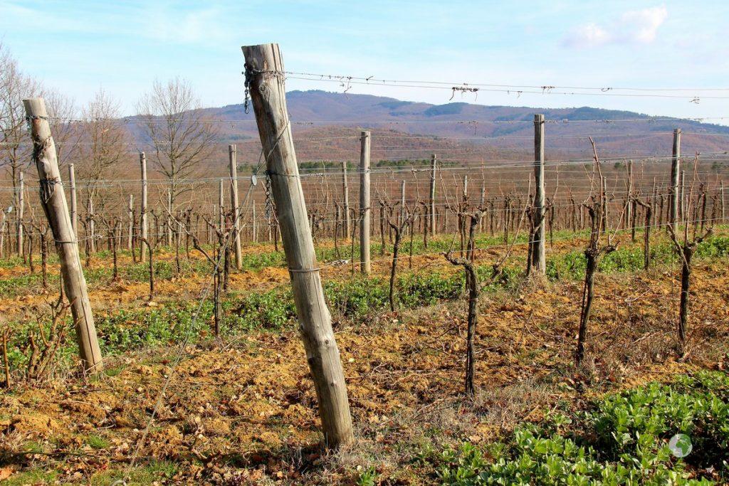 azienda agricola pomario- Borghi Umbria