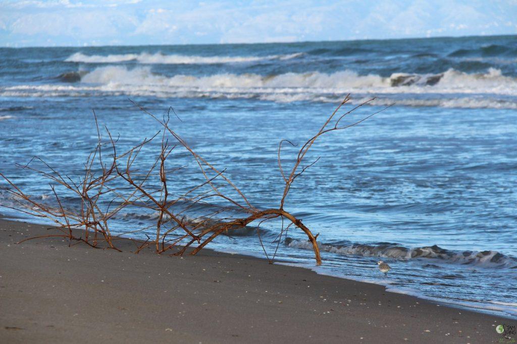 spiaggia di margherita di savoia